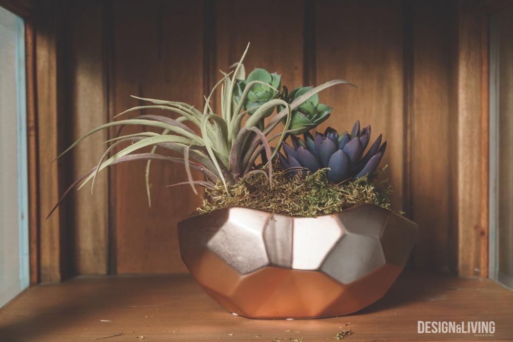 copper pot with succulents